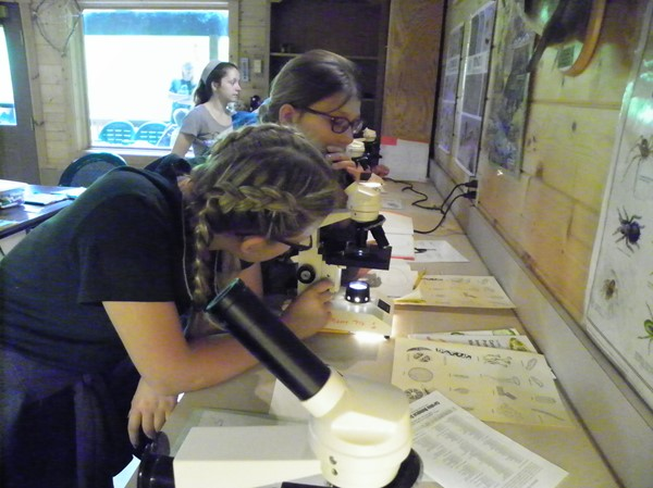 Microscopic Investigations